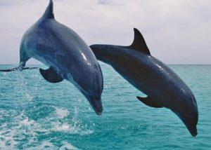 Chiêm bao, nằm mơ thấy cá heo điềm gì, đánh lô đề con gì?