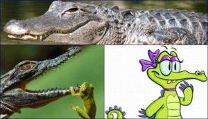 Chiêm bao, nằm mơ thấy cá sấu điềm gì, đánh lô đề con gì?