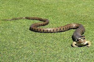Giải mã giấc mơ, chiêm bao, nằm mơ thấy rắn cắn điềm gì?