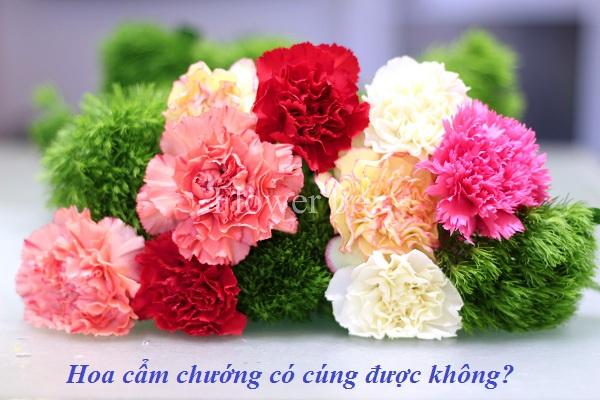Hoa cẩm chướng có cúng được không