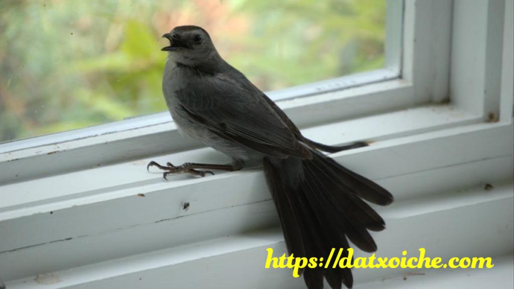 Chim bay vào nhà có điềm gì, hên hay xui