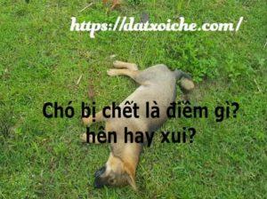 Chó bị chết là điềm gì? hên hay xui?