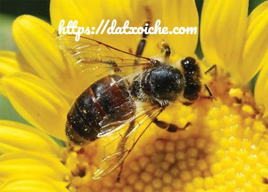 Đánh đề con ong số mấy?