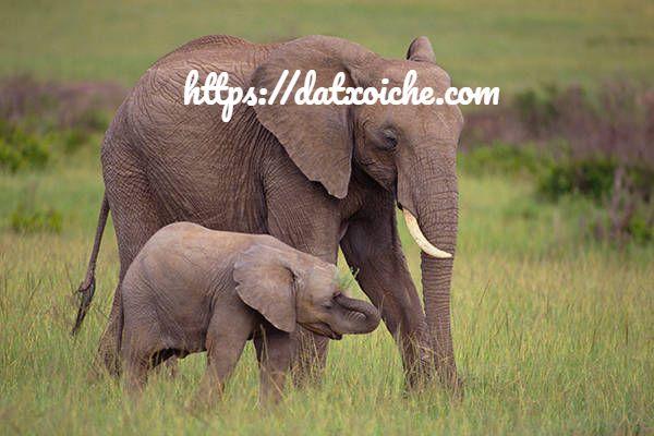 Mơ thấy con voi đánh đề số mấy, là điềm gì?