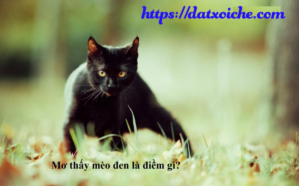 Nằm mơ thấy mèo đen đánh con gì, là điềm gì?