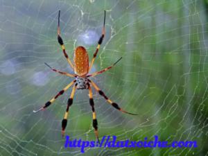 Nằm mơ thấy nhện đánh lô đề con gì, là điềm báo gì?