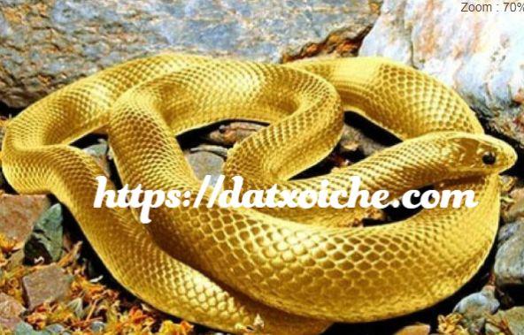 Mơ thấy rắn vàng đánh con gì?