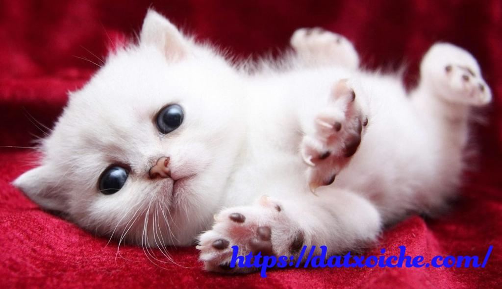 Nằm mơ thấy mèo trắng đánh số mấy?