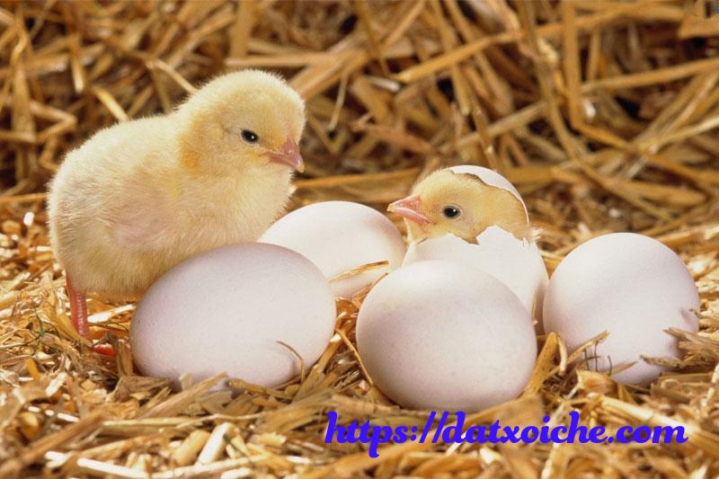 Nằm mơ thấy trứng gà đánh con gì?