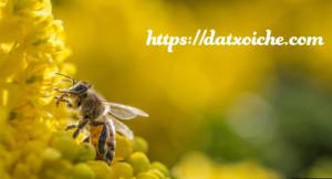 Ong bay vào nhà là điềm báo gì, tốt hay xấu?