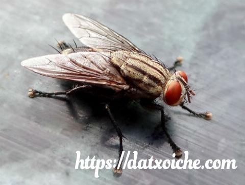 Con ruồi số mấy trong lô đề ?
