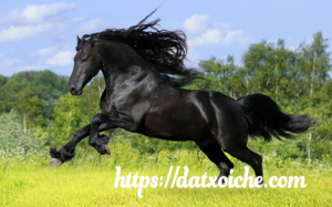 Nằm mơ thấy ngựa đánh số gì, là điềm gì?