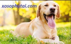 Giải mã chiêm bao thấy chó và ý nghĩa tâm linh có thể bạn chưa biết - xosophutai.com